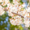 ブログ記事のまとめ【2017年3月中に書いたブログ】 - 大阪府茨木市のあなたの街のでん